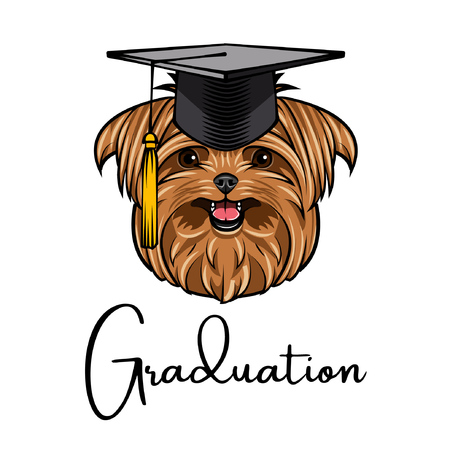 Yorkshire terrier graduate. Graduations cap hat. Dog portrait. Yorkshire terrier head. Vector illustration.