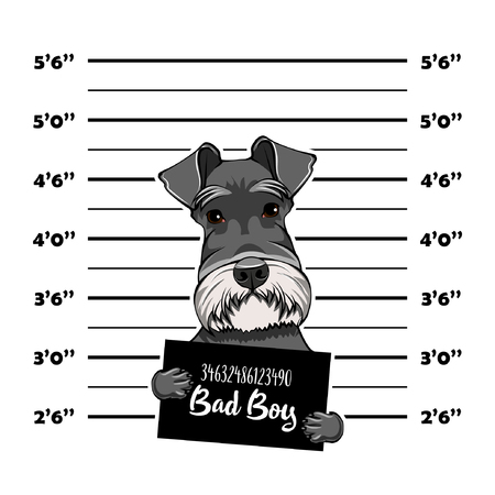 Schnauzer Dog prison. Bad boy. Police mugshot background. Schnauzer criminal. Arrest photo. Vector illustration. Stock Illustratie