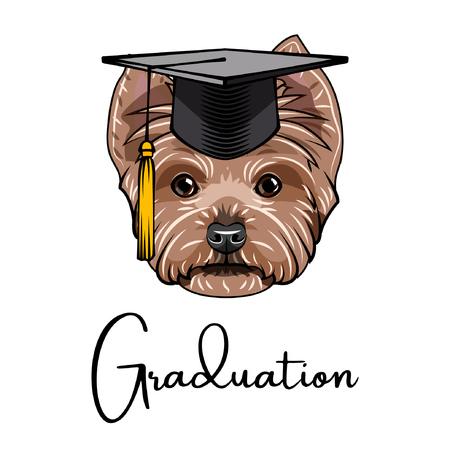Yorkshire terrier graduate. Graduations cap hat. Dog portrait. Yorkshire terrier head. Vector illustration.