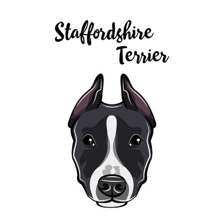 Staffordshire Terrier portrait. Dog head. Staffordshire Terrier breed. Vector illustration. Ilustração