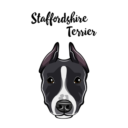 Staffordshire Terrier portrait. Dog head. Staffordshire Terrier breed. Vector illustration. Illustration