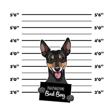 Russian Toy Terrier Criminal. Police banner. Arrest photo. Police placard, Police mugshot, lineup. Police department banner. Toy Terrier offender. Vector illustration.