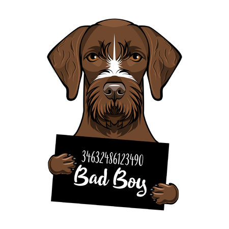German Shorthaired pointer dog. Prisoner, convict. Dog criminal. Arrest photo. Mugshot photo. Dog bad boy. Vector illustration.