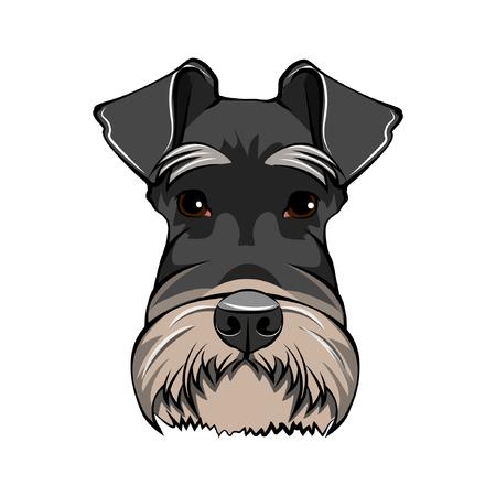 Schnauzer Dog Portrait. Black Schnauzer breed. Dog head. Vector illustration. Illustration