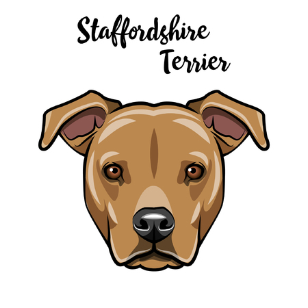 Staffordshire Terrier dog head. Staffordshire Terrier portrait. Vector illustration. Vectores