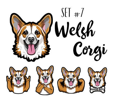 Welsh Corgi dog set. Horns gesture, Middle finger, Muscles, Bone. Corgi head, face, muzzle. Welsh corgi portrait. Vector illustration. Illustration