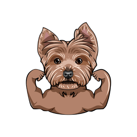 Yorkshire terrier dog. Muscles. Sportive dog portrait. Yorkshire terrier portrait. Vector illustration. Ilustração