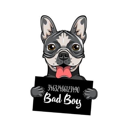 Bulldog Bad boy. Dog prison. Arrest photo. Police mugshot background. Bulldog dog criminal. Arrested dog. Vector illustration.