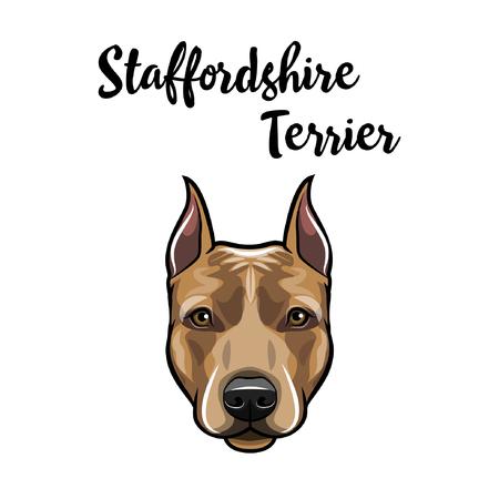 Staffordshire Terrier portrait. Dog head. American Staffordshire Terrier breed. Dog face, muzzle. Vector illustration.