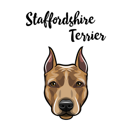 Staffordshire Terrier portrait. Dog head. American Staffordshire Terrier breed. Dog face, muzzle. Vector illustration.
