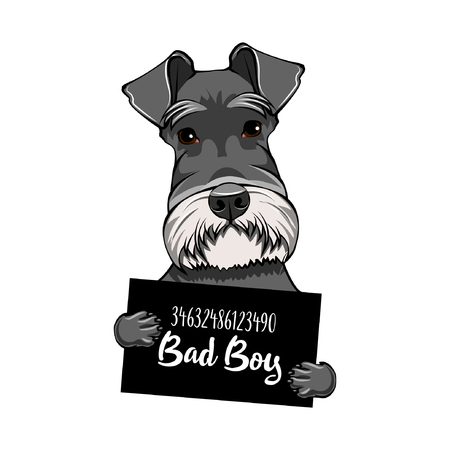 Schnauzer Dog slechte jongen. Arrestatie foto. Aanplakbiljet van de politie. Hondencrimineel. Schnauzer gevangene. Vector illustratie.