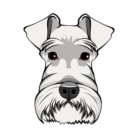 Schnauzer Dog Portrait. White schnauzer head. Dog face, muzzle. Cute pet. Vector illustration.