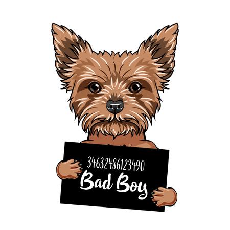 Yorkshire terrier Bad boy. Dog prison. Police mugshot. Yorkshire terrier criminal. Arrest photo. Vector illustration.