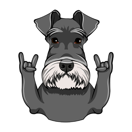Schnauzer Dog Portrait. Rock gesture, Horns. Cute dog. Schnauzer breed. Vector illustration.
