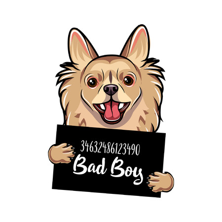Chihuahua Bad boy. Dog prison. Police mugshot. Chihuahua criminal. Arrest photo. Vector illustration.