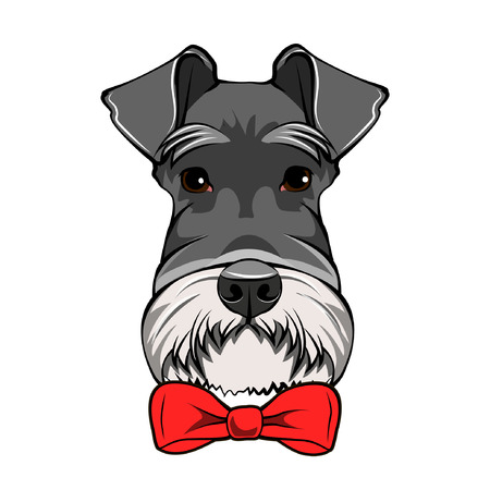 Schnauzer Dog Portrait. Decorative red bow. Dogs accessory. Vector illustration.
