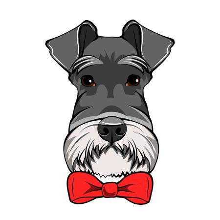 Schnauzer Dog Portrait. Decorative red bow. Dogs accessory. Vector illustration.
