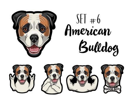 American Bulldog dog. Gestures set. Middle finger, Rock gesture, Muscles, Horns, Bone. Dog head, face, muzzle. American Bulldog portrait. Vector illustration.