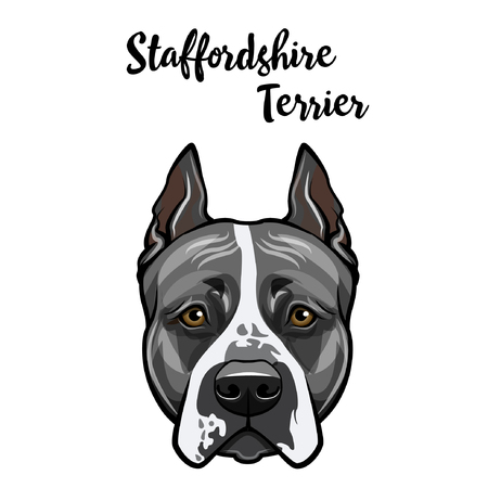 Staffordshire Terrier portrait. Dog head. Domestic dog face. Staffordshire terrier breed. Vector illustration.