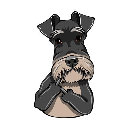 Schnauzer dog portrait. Middle finger gesture. Cute dog. Schnauzer breed. Vector illustration.