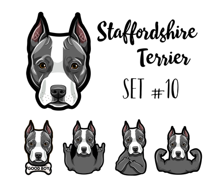 Staffordshire Terrier dog. Gestures set. Muscles, Bone, Horns, Rock gesture, Middle finger. Dog portrait. Staffordshire terrier head, face, muzzle. Vector illustration. Çizim