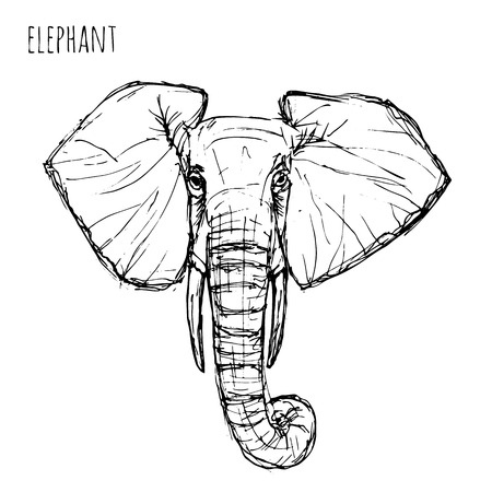 drawing large: Wild animal . Black and white elephant face drawn pen and ink on a white background Vector  illustration