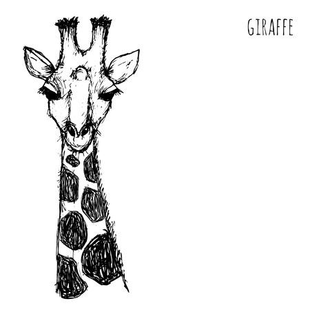jirafa: Safari de animales salvajes. Cara de la jirafa en blanco y negro dibujado lápiz y tinta sobre un fondo blanco ilustración vectorial eps10