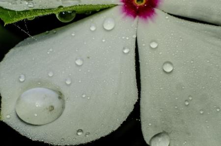 Dew on flower photo