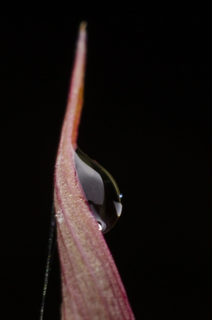 This dew drop is taken on my garden at night photo