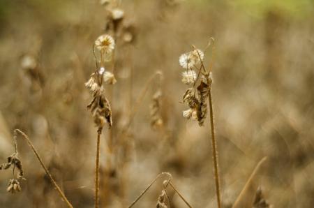 La flor de muerto y secado en caliente flor seasonThe muerto y secado en una temporada de calor