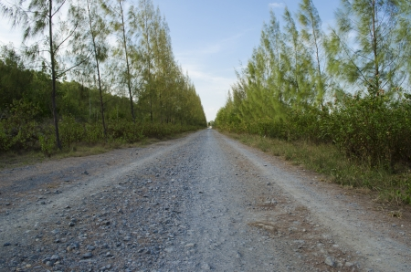 unpaved road: The unpaved road with christmast tree all over the road Stock Photo