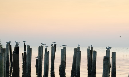 desperation: Birds On wood at sea looking for fish and resting. Shoot on sunset.