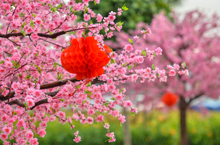 Close view of plastic pink sakura flower on wooden tree with chinese red lantern and soft background Stock Photo