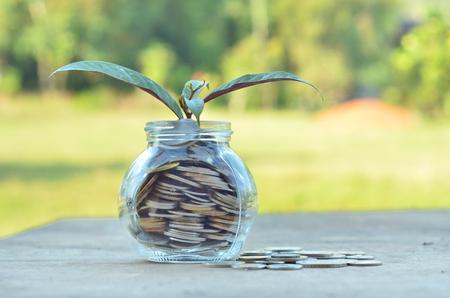 Concept - Plant dans le récipient de l'argent sur fond de nature