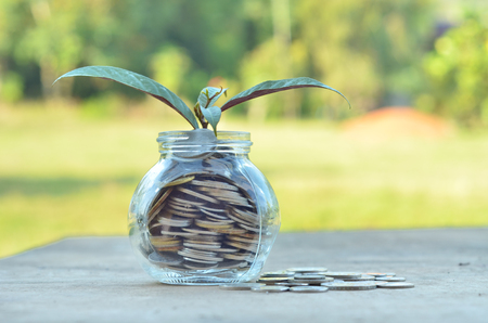 Concept - Plant in Money container over nature background
