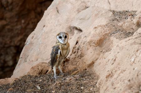 caving: An Owl on a mountain
