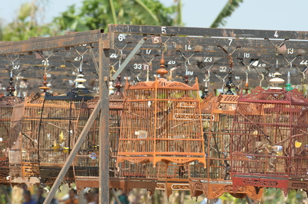 Bird in cage collected together for Bird Singing Contest Stock Photo