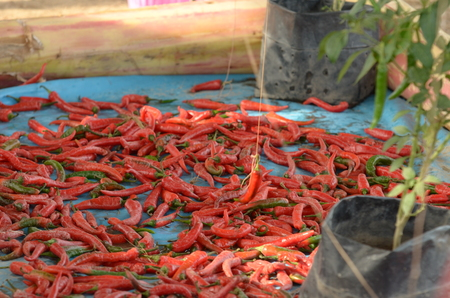 Bunch of red chilli on floor Stock Photo