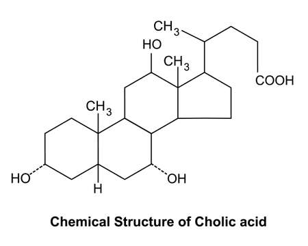 Cholic acid is a major primary bile acid produced in the liver and usually conjugated with glycine or taurine. It facilitates fat absorption and cholesterol excretion.