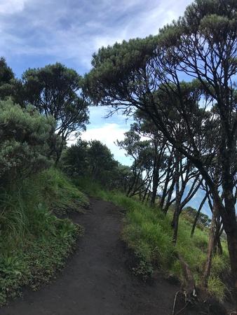 Mount Merbabu trail Imagens