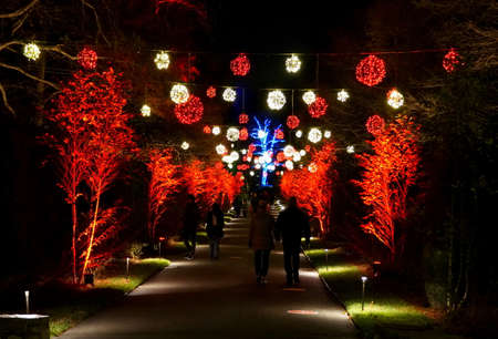 Trees and path decorated with red and yellow Christmas lights