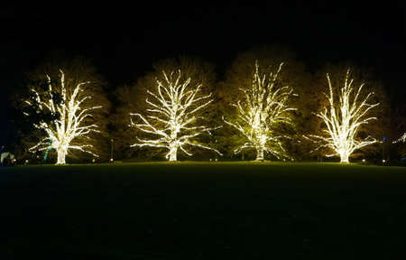 A row of beautiful trees with branches decorated in yellow string lights