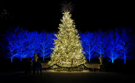 A large Christmas tree surrounded by illuminated background with blue lights Stockfoto