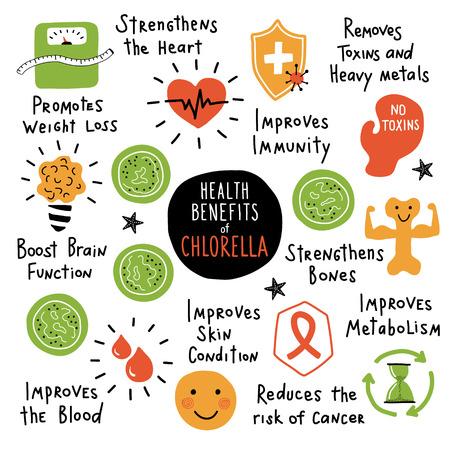 Chlorella, essbare Algen, gesundheitliche Vorteile. Lustiges handgezeichnetes Infografik-Poster. Cartoon-Vektor-Illustration. Getrennt auf Weiß.