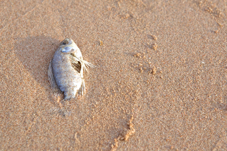 gruesome: Carcasses of dead fish on the beach