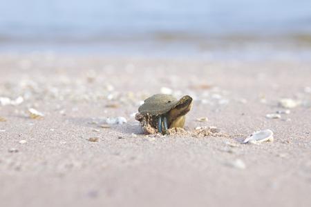 Snail on a sand bar photo