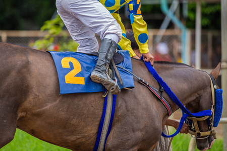 A Jockey Leads the Number two Horse to Start Gate at Horse Race