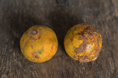 Rotten and fresh tangerine fruit with mold.
