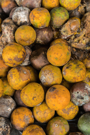 perishable: Rotten and fresh tangerine fruit with mold.