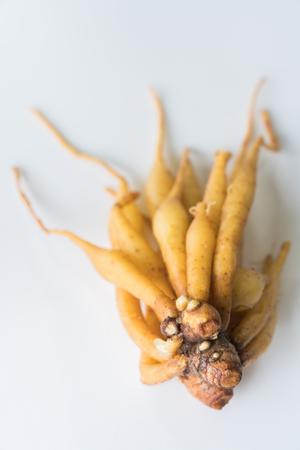 rotunda: ingredient of thailand spices called galingale on white background. Stock Photo